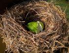 Ich wünsche Euch allen ein FROHES OSTERFEST und viele Eier im Nest!