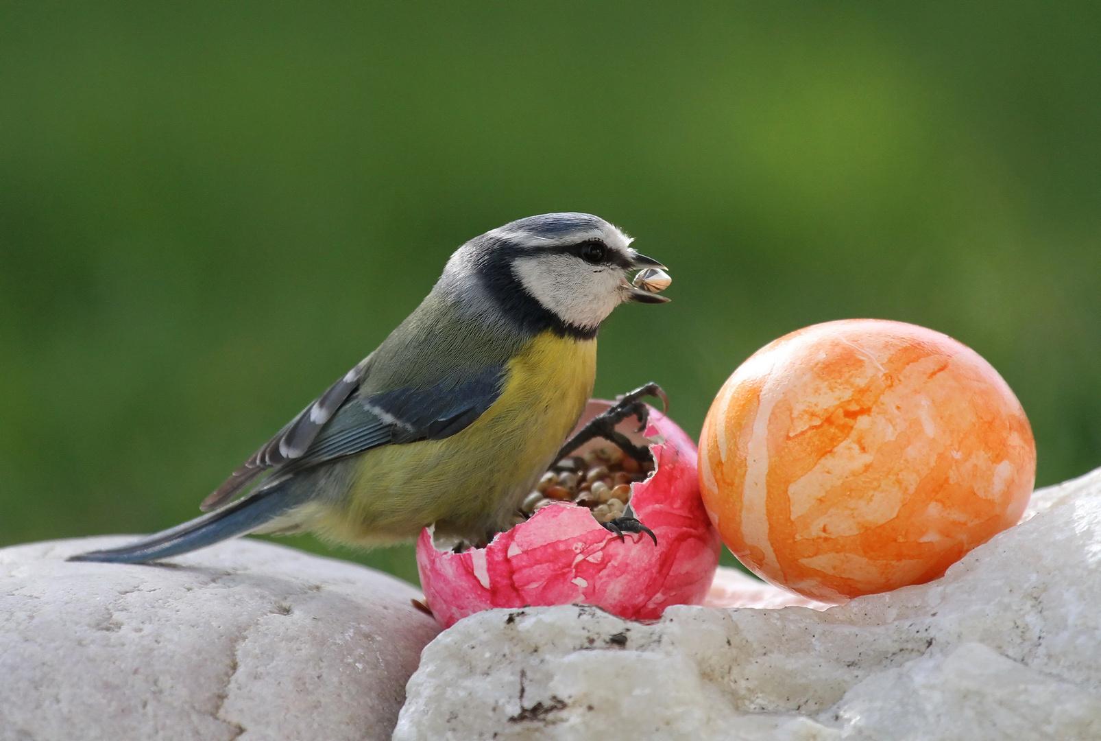 Ich wünsche Euch allen ein schönes und harmonisches Osterfest!!!