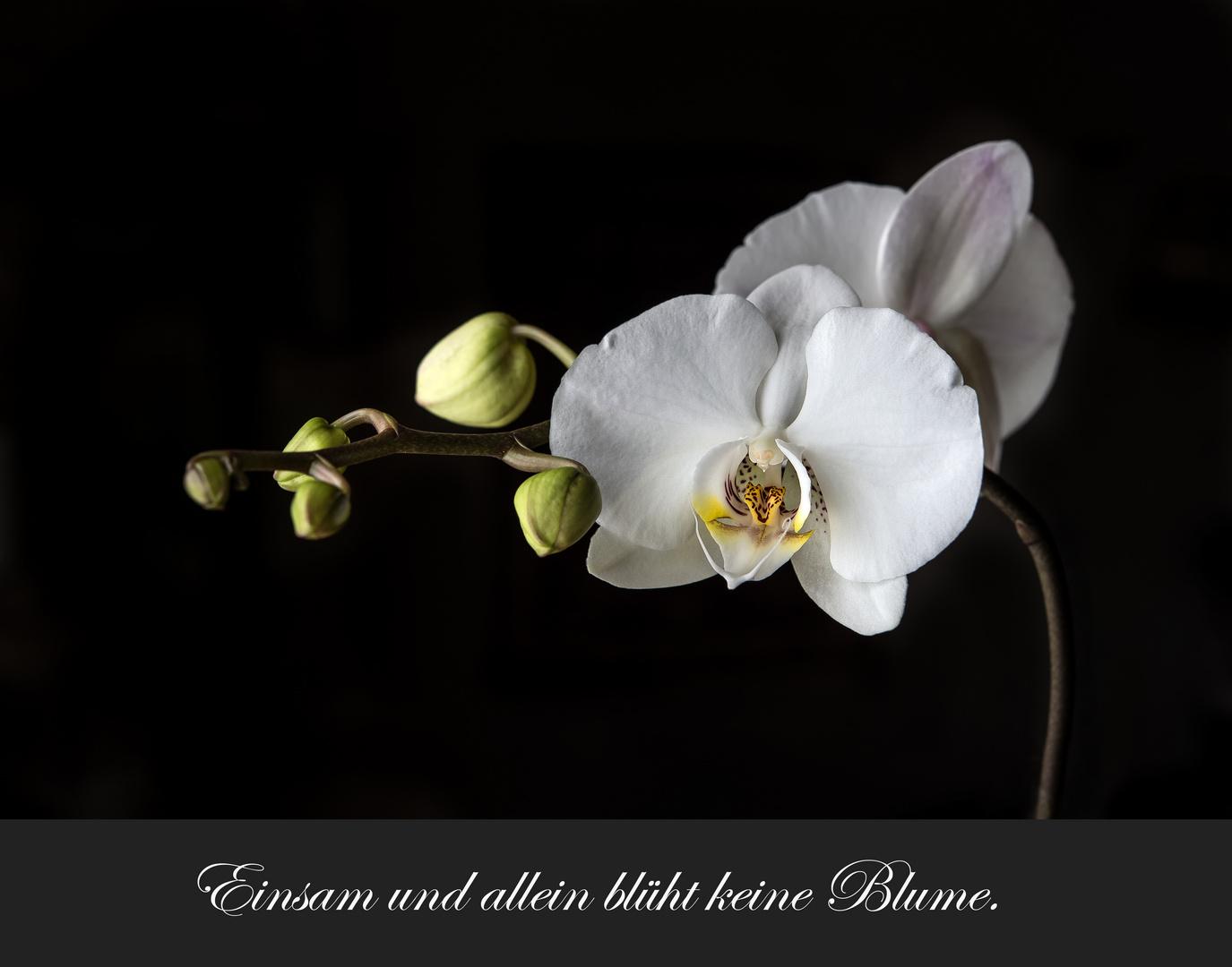 ich w nsche euch allen einen sch nen abend foto bild pflanzen pilze flechten bl ten. Black Bedroom Furniture Sets. Home Design Ideas