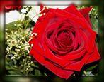 Ich wünsche Euch morgen einen schönen Valentinstag!