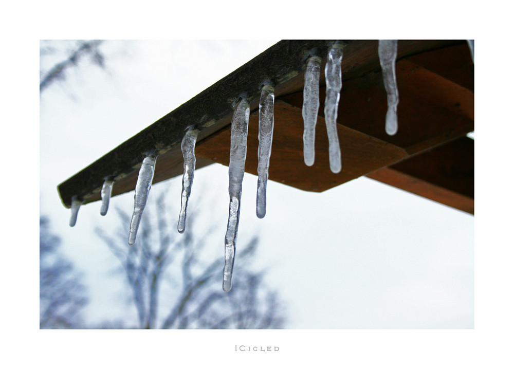 - Icicled -