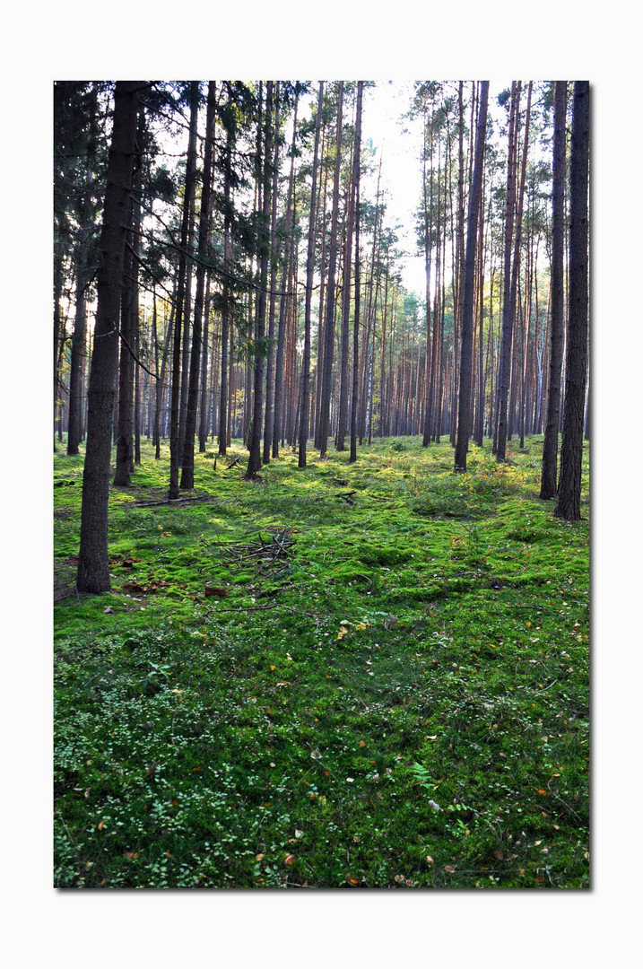 Idealer Pilzwald