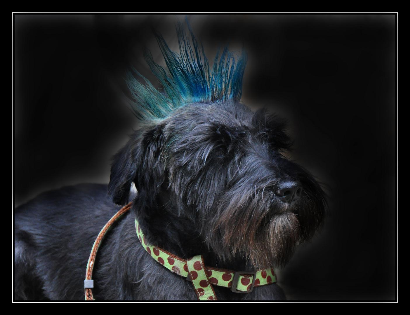Idefix - der Gothenhund