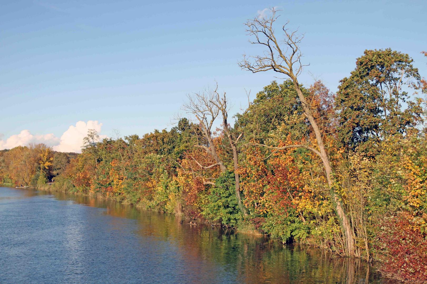 Idylische Herbstimmung am Ulmer Donauufer entlang 2