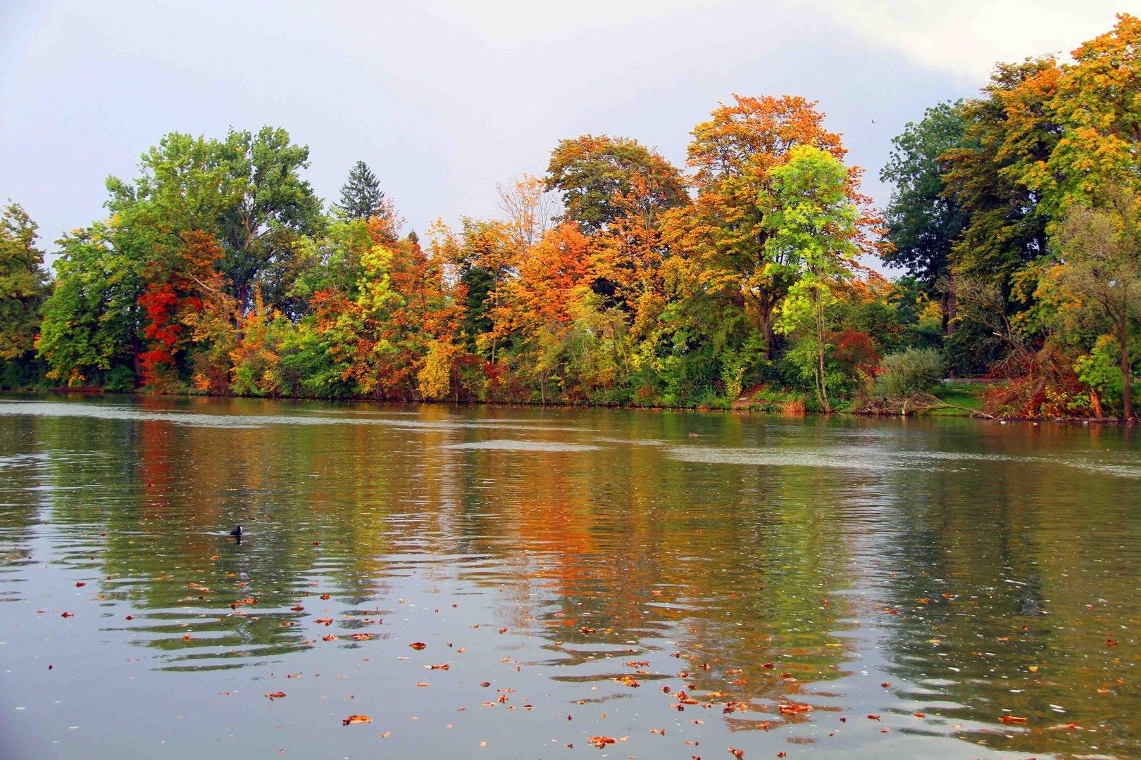 Idylische Herbstimmung am Ulmer Donauufer entlang 3