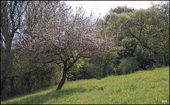 Idyll mit Apfelbaum