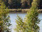 Idylle am Bergwitzsee