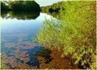 Idylle am Bramfelder See