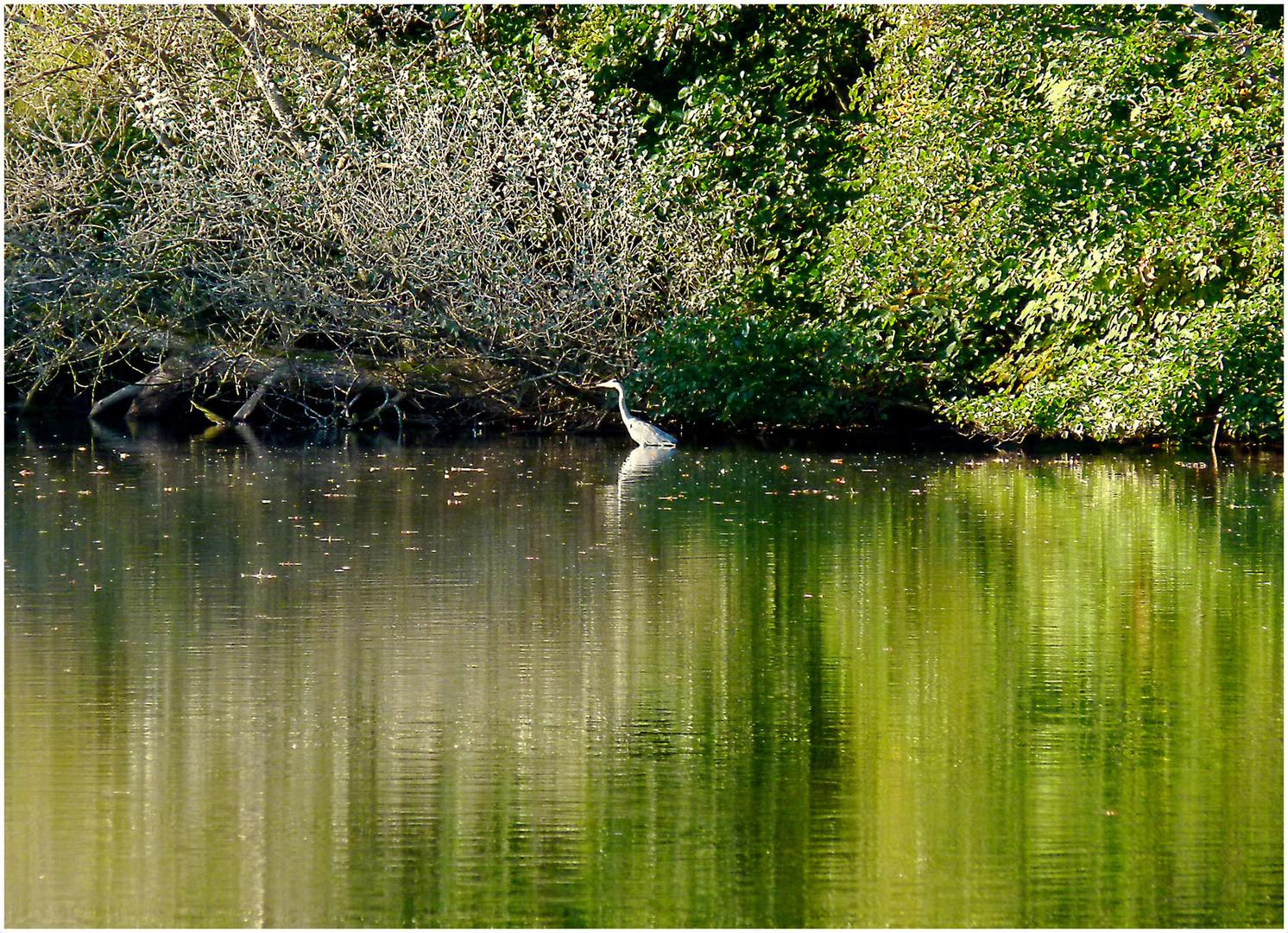 Idylle am Bramfelder See mit Reiher