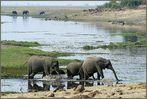 Idylle an der Chobe Riverfront