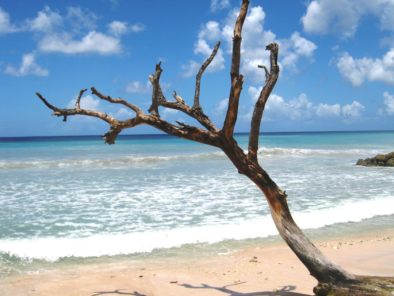 Idylle auf Barbados