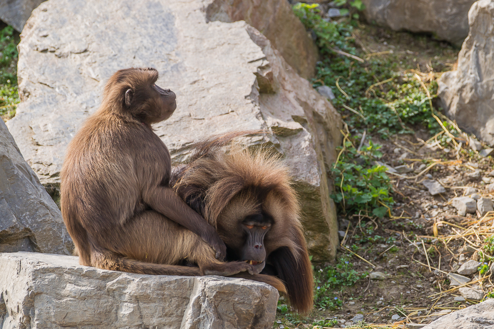 Idylle im Zoo