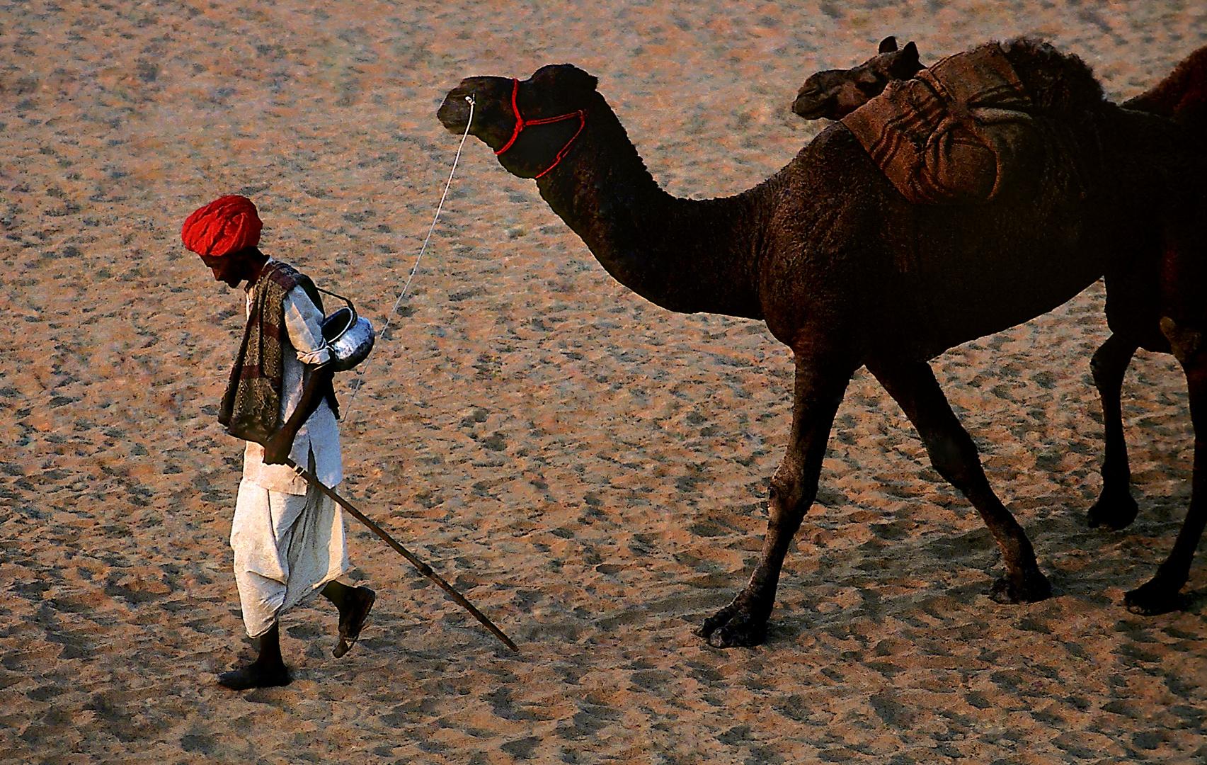 Idylle in der Wüste