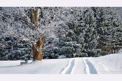 Idylle in Eis und Schnee