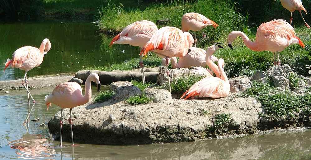 Idyllische Flamingo Familie