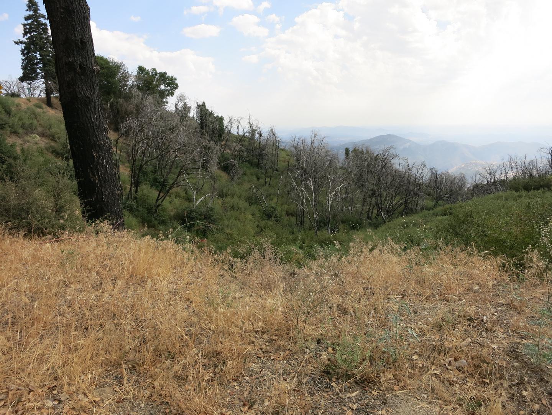 Idyllische Landschaft - von Bränden gezeichnet (2)
