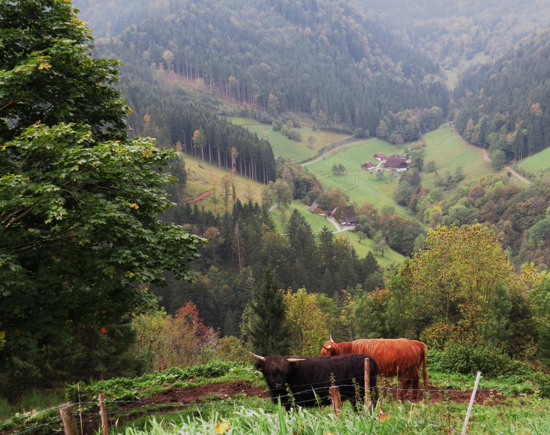 Idyllischer Schwarzwald...