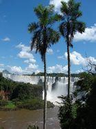 IGUAZU PALMERAS - ARGENTINA