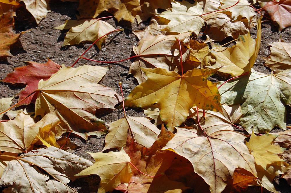 Ihr Blätter wollt ihr tanzen?