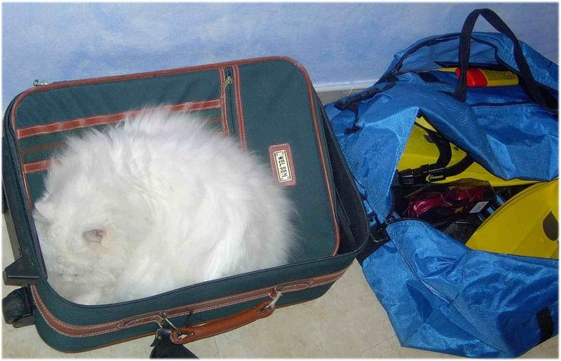Ihr koennt ruhig die Koffer packen.....
