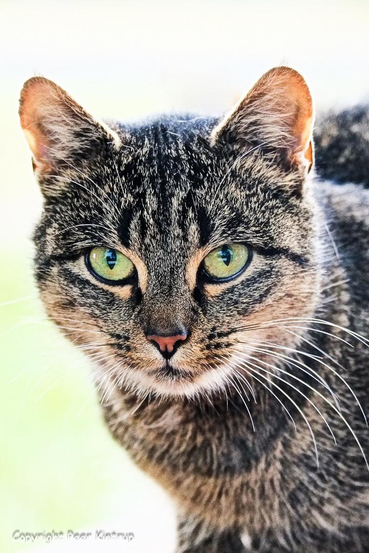 "Ihr Name ist ""Katze""..."