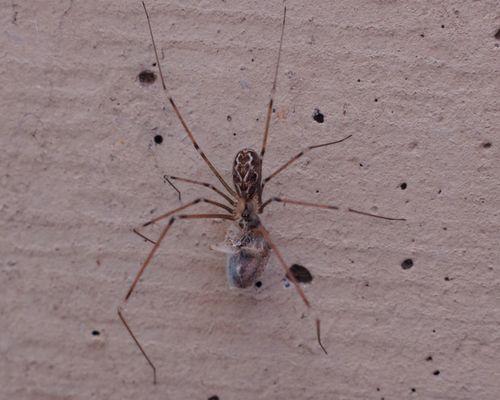 iI ragno e la preda