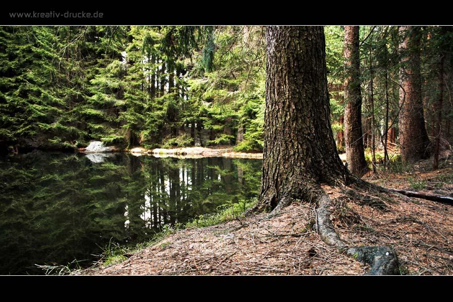 II. Versuch - Im dunklem Wald