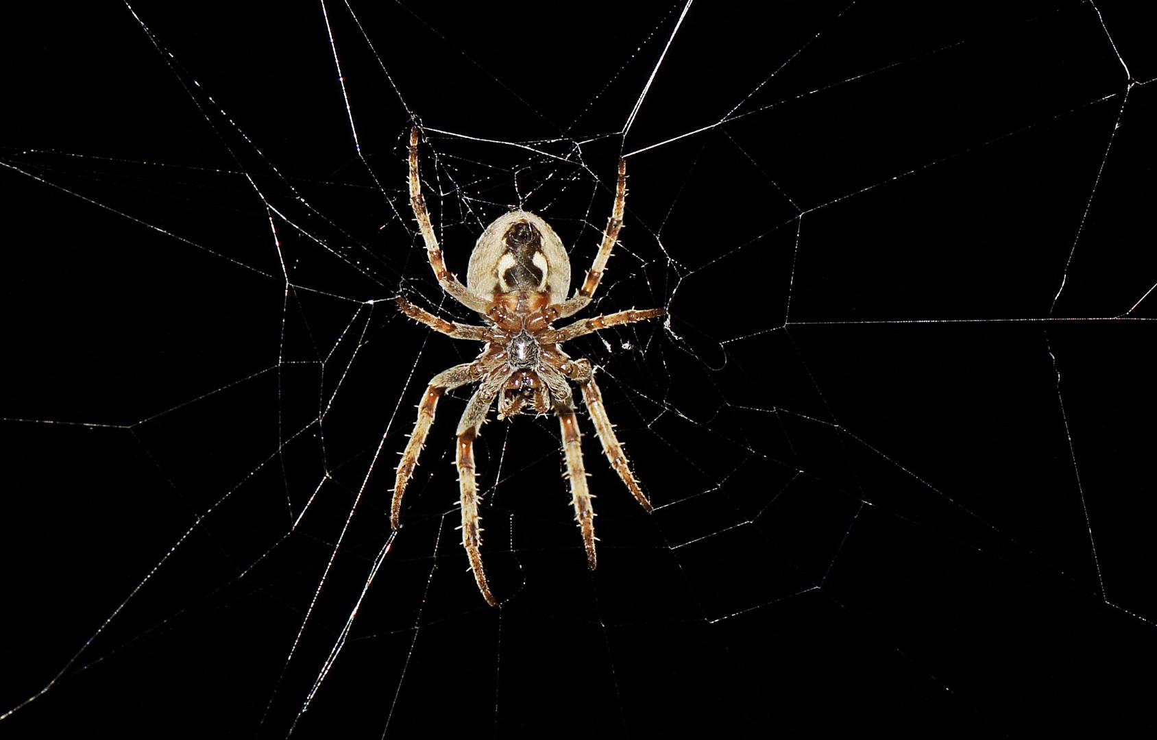 """"""" Iiiih - eine Spinne !""""....."""