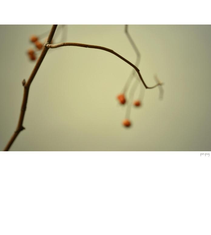 ikebana.[05]