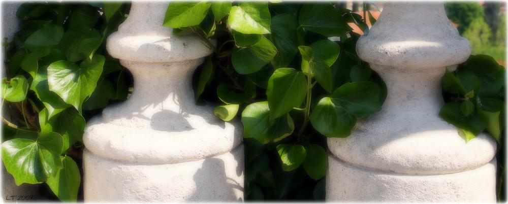 Il bianco e il verde
