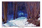Il bosco fatato