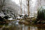 Il bosco incantato / the magical forest