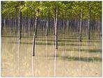 Il bosco parallelo-C
