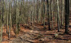Il bosco racconta: camminando tra i giganti