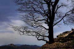 il bosco racconta - il guardiano