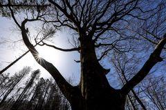 il bosco racconta - il saluto dell'albero