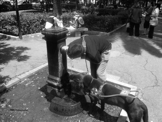 Il cane capisce il significato delle persone