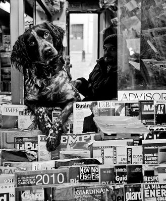 IL CANE EDICOLANTE / THE NEWSPAPERS DOG-SELLER