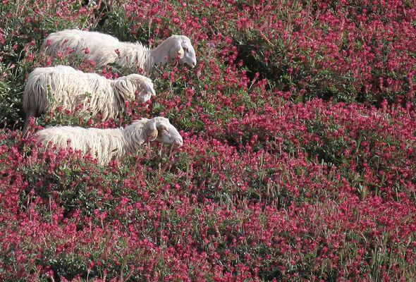Il canto della natura : l'ebbrezza della primavera // in COPERTINA FC il 5 maggio alle 20.00