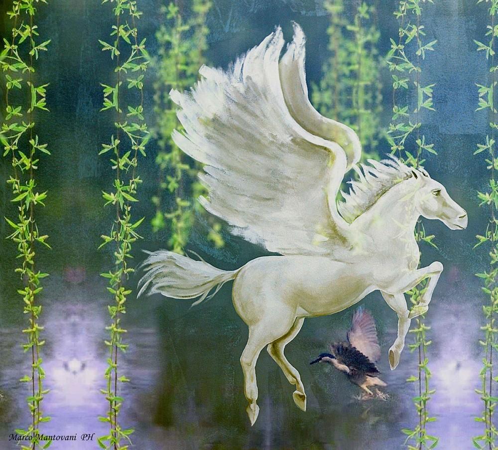 Immagini cavallo alato pegasus il cavallo alato fotografia for Disegni cavalli alati