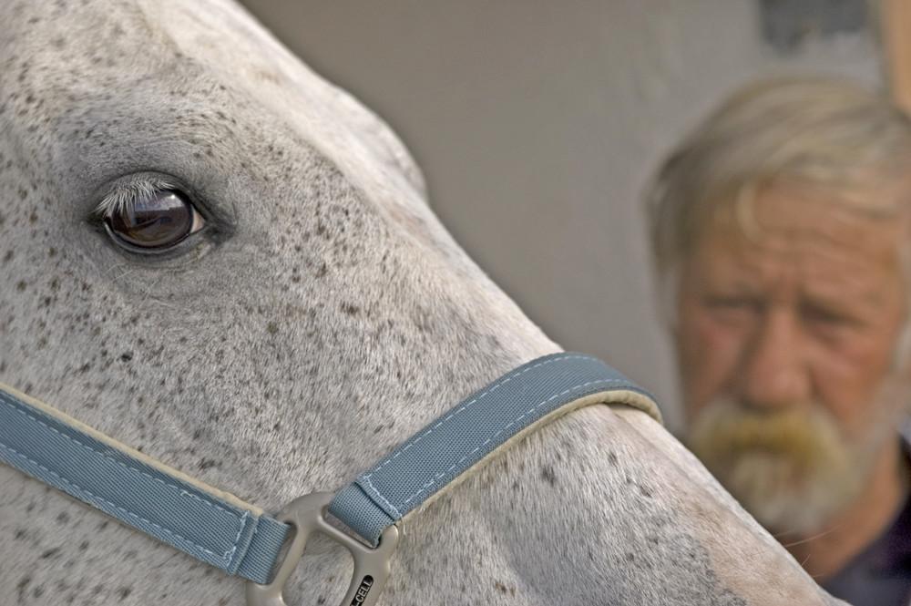 Il Cavallo e l'Uomo