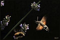 il colibrì dei poveri (2)