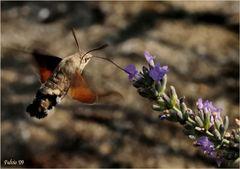 Il colibrì dei poveri (3)