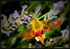 Il colibrì dei poveri (4)