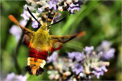 Il colibrì dei poveri (5)