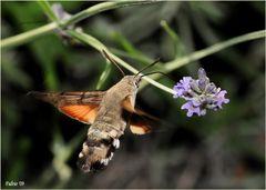 il colibrì dei poveri...