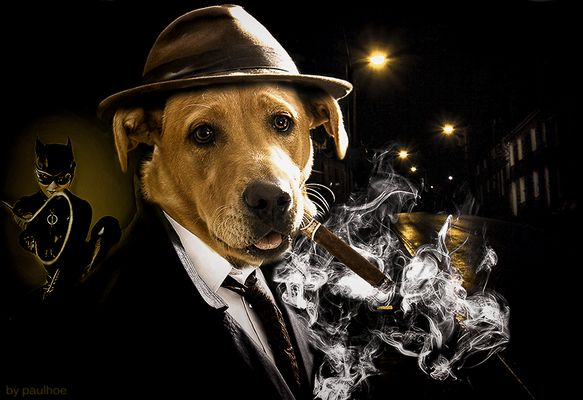 Il commissario Dog Labrador e Catwoman