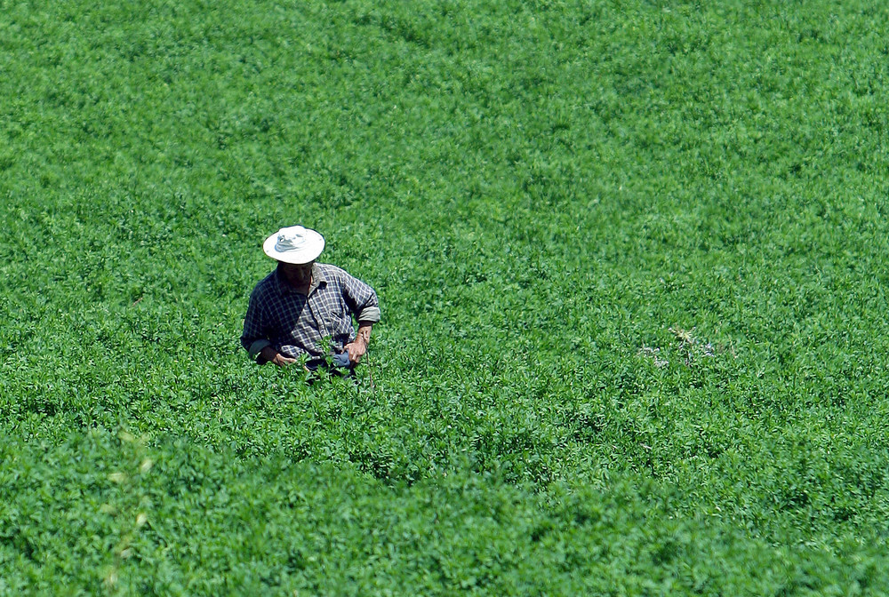 Il contadino...