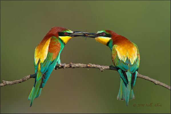 Il corteggiamento