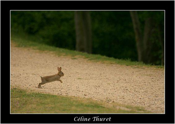 Il court, il court...le lapin